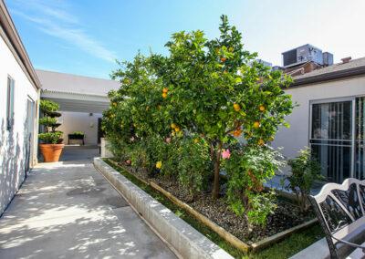 Monterey Park fruit trees